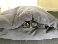 Whippet-Pita-bed-large---Zippy