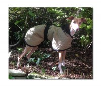 Showerproof Quilted  Italian Greyhound Coat lined with Faux Sheepskin