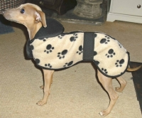 Italian Greyhound Fleece puppy coat