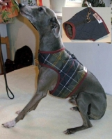 Comforted Quilted Italian Greyhound Harness