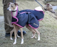 Waterproof Italian Greyhound Coat lined with Faux Sheepskin