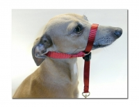 Gentle Leader Head Collar for IG's that Pull on the Lead