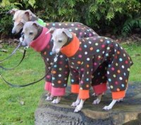 Italian Greyhound Trousersuit Brown Dotty Fleece