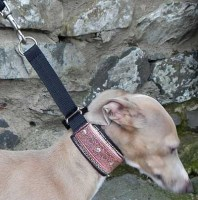 Wide Fabric Italian Greyhound Collars
