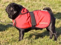 waterproofpugcoat